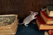 Close-up The Young Mouse Stands On Pile Of Old Books In The Library And Looks On The Head Of Second  poster