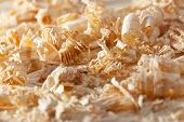 Wooden Shavings Closeup