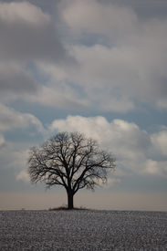 stock photo of winter trees  - nature winter tree 01 - JPG