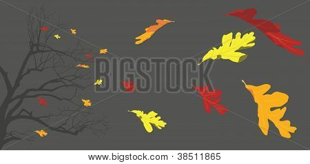 Branches and Autumn Leaves