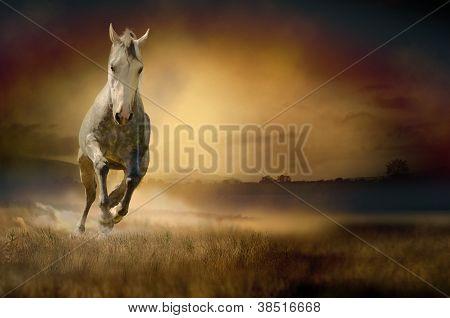 Horse galloping through sunset valley