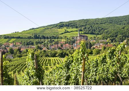 Andlau (Alsacia) - viñedos