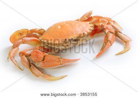 Crab Isolated On White Back Ground