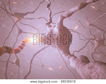 Conceito de neurônio