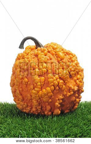 closeup of a warty pumpkin on the grass on a white background