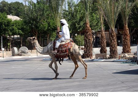 JERICHO , ISRAEL - OCTOBER 04: Unidentified Bedouin man wait tourist near his dromedary in Jericho, Israel on October 04, 2006. Many Bedouin men work as guides for day-trips in the Judea desert.