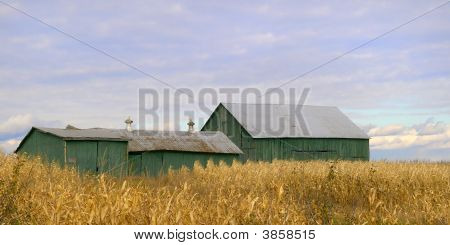 Barns And Corn