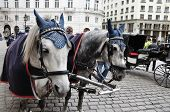 pic of pavestone  - Spotted black and white horses and carriage on square are waiting for passengers - JPG