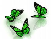 Three Beautiful Green Butterfly