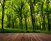 picture of leafy  - wood textured backgrounds in a room interior on the forest backgrounds - JPG