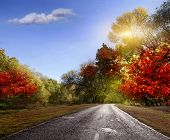 picture of paved road  - paved road in the autumn forest - JPG
