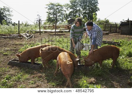 Father and young boy feeding pigs in sty