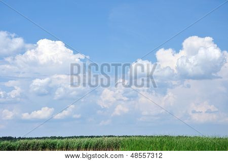 Sky With Fluffy Clouds Above Reeds