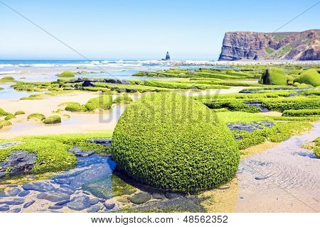 Rocks full of seaweed at the westcoast in Portugal
