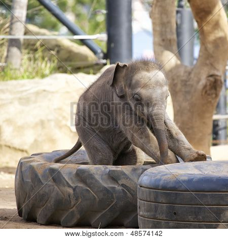 Baby Elephant at Zoo