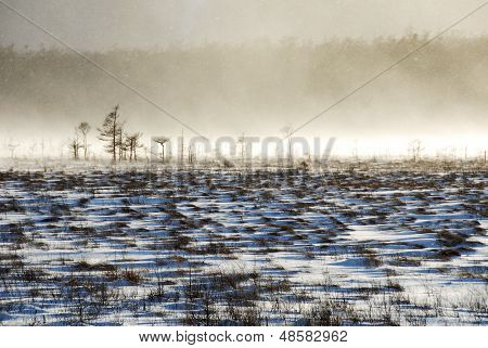 Senjogahara In Snowstorm,nikko,japan