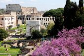 Foro Romano (roman Forum) And Colosseum,rome,italy