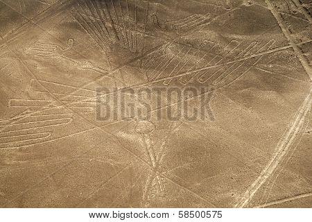Nazca Lines - Condor