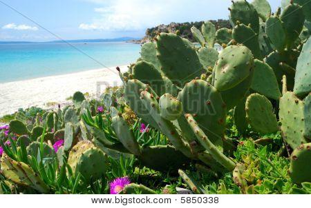 cactus plant on the beach