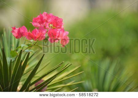 Pink Flower& Green Background