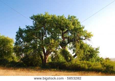 Two Trees In The Colorado Prairie