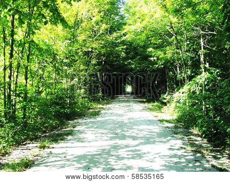Tunnel Through Trees on Kal-Haven Trail