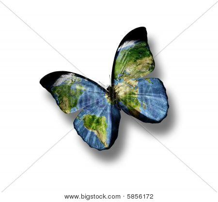 Welt von Schmetterling