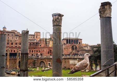 Imperial Fora, Rome