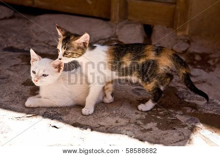 Kittens In Shadow