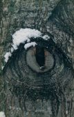 image of godzilla  - light snow on this stub of a branch gives the appearance of the eye of a monster - JPG