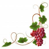 image of grape-vine  - Red ripe grapes on a white background - JPG