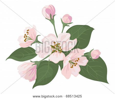 Apple tree flowers and green leaves