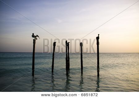 Pelicans resting on Poles