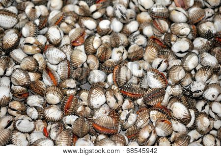 Thai Shells Blood Cockles