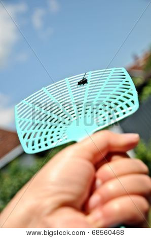 Dead fly on a flyswatter