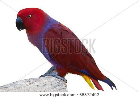 Colorful Cockatoo Bird 1