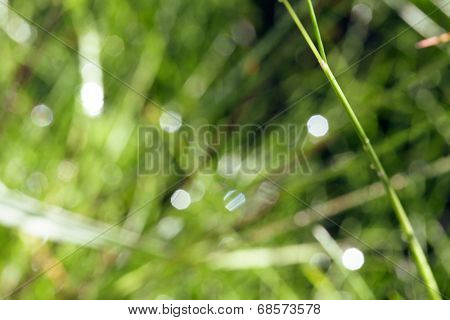 green grass after rain blured with bokeh