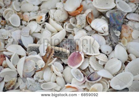 sea shell floor on Sanibel Island beach