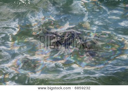 USS Arizona Oil Drops