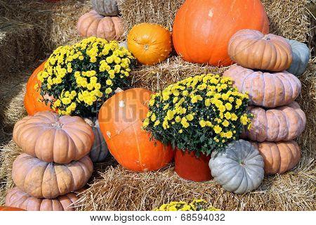Decorative Bumpy Gourd