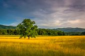 foto of cade  - Tree in a field at Cade - JPG