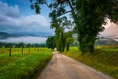 stock photo of cade  - Trees along a dirt road on a foggy morning at Cade - JPG