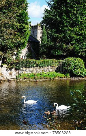 Swans on River Wye, Ashford-in-the-Water.