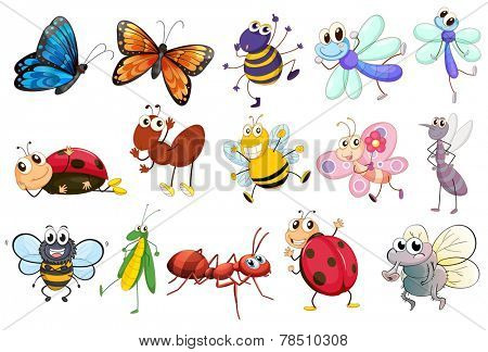 Illustration of a set of different kinds of insects