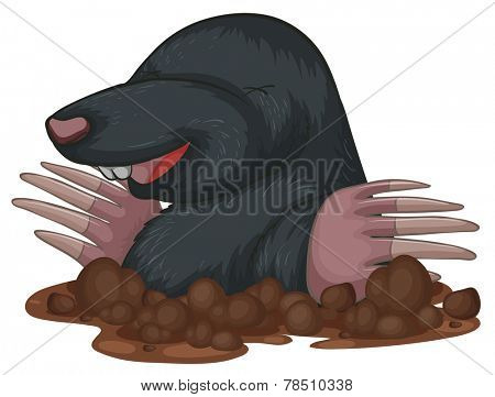 Illustration of a close up mole