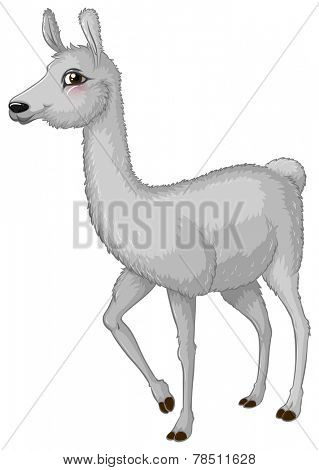 Illustration of a lama standing