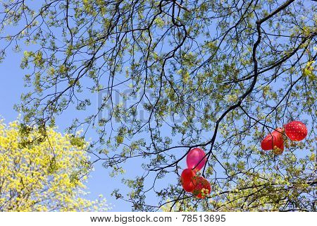 Balloons In The Branches Of A Tree. Spring.