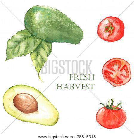 Watercolor hand drawn illustration with fresh green avocado and red tomatoes on the white background