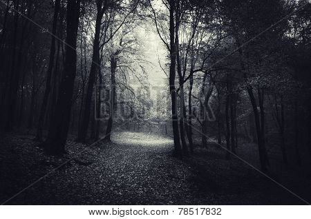 Dark path trough a mysterious forest
