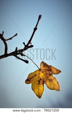 Last Leaf Lomo